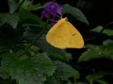 Butterfly00002.jpg
