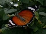 Butterfly00003.jpg