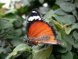Butterfly00004.jpg