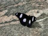 Butterfly00005.jpg