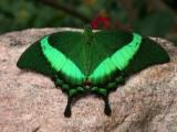 Butterfly00006.jpg