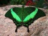 Butterfly00009.jpg