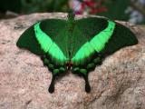 Butterfly00010.jpg