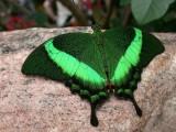 Butterfly00011.jpg