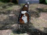 Butterfly00012.jpg