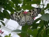 Butterfly00014.jpg