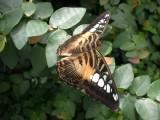 Butterfly00016.jpg