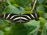 Butterfly00017.jpg
