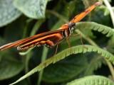 Butterfly00018.jpg