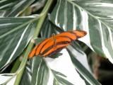 Butterfly00019.jpg