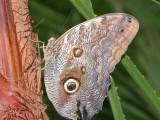 Butterfly00020.jpg