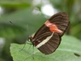 Butterfly00022.jpg