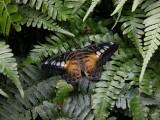 Butterfly00024.jpg