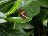 Butterfly00025.jpg
