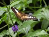 Butterfly00026.jpg