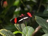 Butterfly00028.jpg