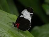 Butterfly00031.jpg