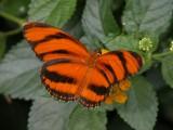 Butterfly00032.jpg