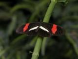 Butterfly00033.jpg