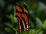 Butterfly00034.jpg