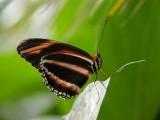 Butterfly00038.jpg