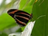 Butterfly00039.jpg