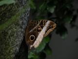 Butterfly00040.jpg