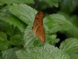 Butterfly00041.jpg