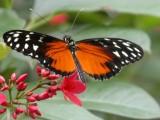 Butterfly00042.jpg