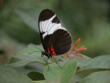 Butterfly00044.jpg