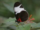 Butterfly00045.jpg
