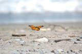 Butterflyl02.jpg