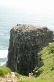 Cape St. Mary