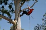 WCISA Tree Climbing Championships at Boyce Thompson Arboretum May 2007