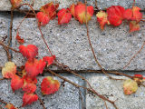 Autumn on the wall