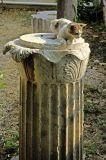 cat column