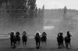 cooma races08 race4b.jpg