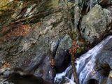 Cunningham Falls, MD 3 (1600x1200 wallpaper)
