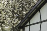 voorjaar in Zuid Limburg