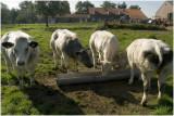 Slenaken - Piemert - boerderij