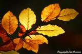 La classique d'automne !