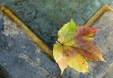Automne . Autumn