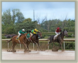 Fort Erie Racing