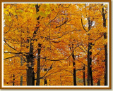 Autumn at Whirlpool State Park, Niagara Falls, NY