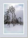 Ice Trees on Goat Island,  Niagara Falls,  NY