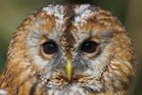 European (Western Palearctic) birds