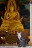 Cat and Buddha-Kanchanaburi