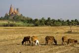Country view-Kanchanaburi