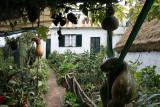 Santana,private garden