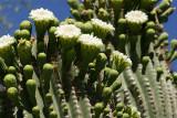 Cholla Cactus Garden in Joshua Tree NP